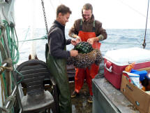 Tuna fishers discover glass float at sea