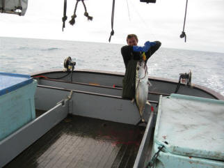 Extra large tuna being held up by deckhand.