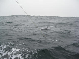 Fishing for tuna on a grey day.